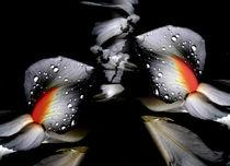wings & feathers by Susanne Brutscher