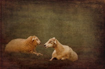 The smiling Sheeps  by AD DESIGN Photo + PhotoArt