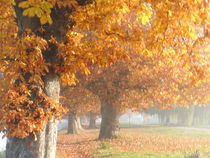 Herbstspaziergang by rosenlady