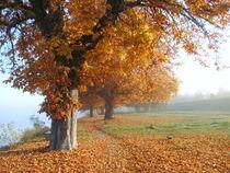 Herbstspaziergang am Rhein by rosenlady
