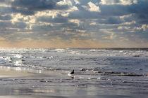An der Küste von © Ivonne Wentzler