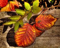 Autumn Leaves von Chris Lord