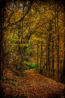 Autumn Trails by Chris Lord