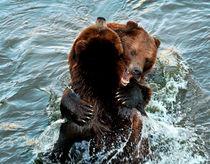Tanzbären  von Barbara  Keichel
