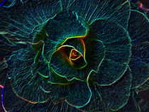 Dark Begonia by Christi Ann Kuhner