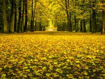 Herbst by gfischer