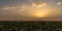 Date Palm Sunrise von Russell Bevan Photography