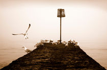 Dawlish Sea Gulls von Russell Bevan Photography