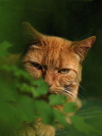 Katze rot von Christine Bässler