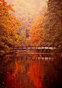 Rich Autumn Colours by Dawn Cox
