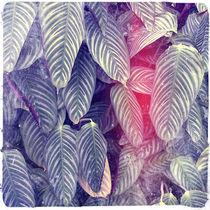 Foliage by Sasha Hatherly