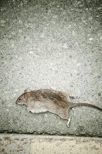 Dead rat by Lars Hallstrom