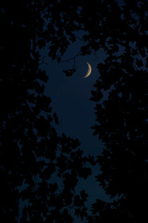Crescent moon in the dark forest von Lars Hallstrom