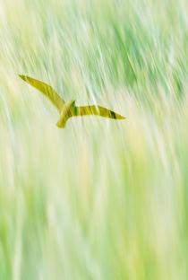 Soaring bird von Lars Hallstrom