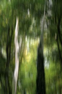 Herbstwald von Jens Berger