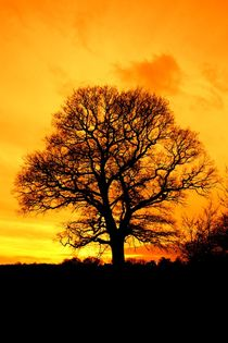 Sunset tree von Ed Lukas