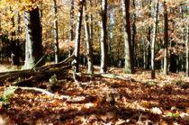 Herbst  von Barbara  Keichel