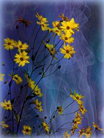 Gelbe Blüten von Elke Balzen