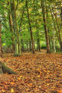 Autumn woods Penllergare by Dan Davidson