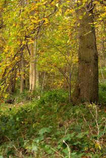 Ancient Woodland by Dawn Cox