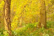 Enchanted Woods von Dawn Cox