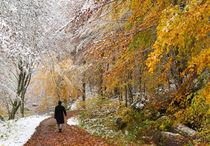 Herbst und Winter im Schaichtal - Naturpark Schönbuch by Matthias Hauser