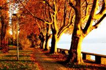 Herbst am See von Renate Dohr