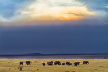 Herd of elephants just before the rain von Maggy Meyer