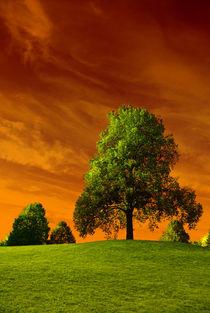 Brennender Himmel  von Violetta Honkisz