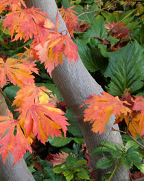 Blätter im Herbst by lorenzo-fp