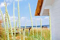 Ostsee von Daniela  Bergmann