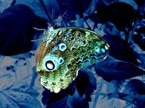 Blue Velvet Butterfly von tiaeitsch