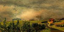 Herbst in den Weinbergen von Marie Luise Strohmenger