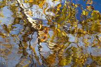 Birke im See von Ursula Pechloff