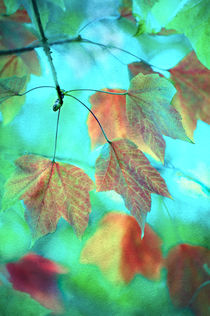 Autumn copper by Dawn Cox