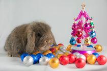 Sweet Baby Rabbit by Kitty Bern