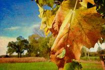Autumn! von Stefan Kierek