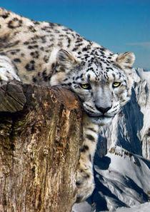 snow lepard by Doug McRae