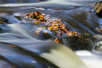 Autumn Leaves In Water by David Pringle