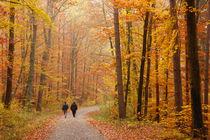 Wald im Herbst - Naturpark Schönbuch von Matthias Hauser