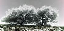 Winter von Jens Berger