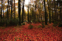 Autumn Forest von Kitty Bern
