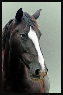 Horse by Doug McRae