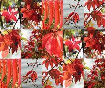 Herbstrausch by Raingard Göbel