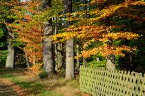 Herbst by Eberhard Loebus