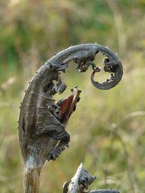 Kleiner Käfer ganz Groß by Ariane Kujas