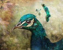 Peacock-face