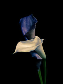 Flowerb-5074441
