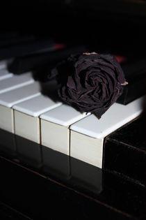 Klaviertasten und schwarze Rose von Edeltraut K.  Schlichting