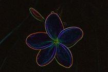 blossom by E-lena BonapArte